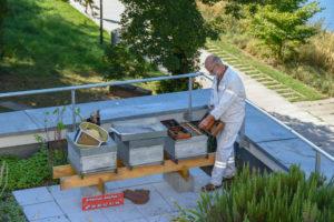 Depuis 2019, 3 ruches sont installées sur le toit-terrasse du siège d'Habitation moderne.