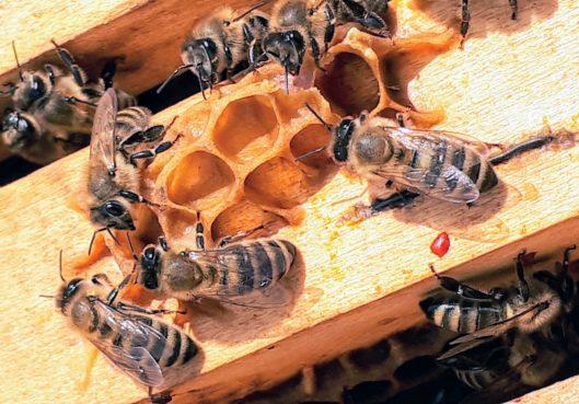 Essaims d'abeilles, que faire ? - Habitation Moderne